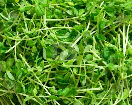 pea shoot salad | Fresh Foods | Pinterest