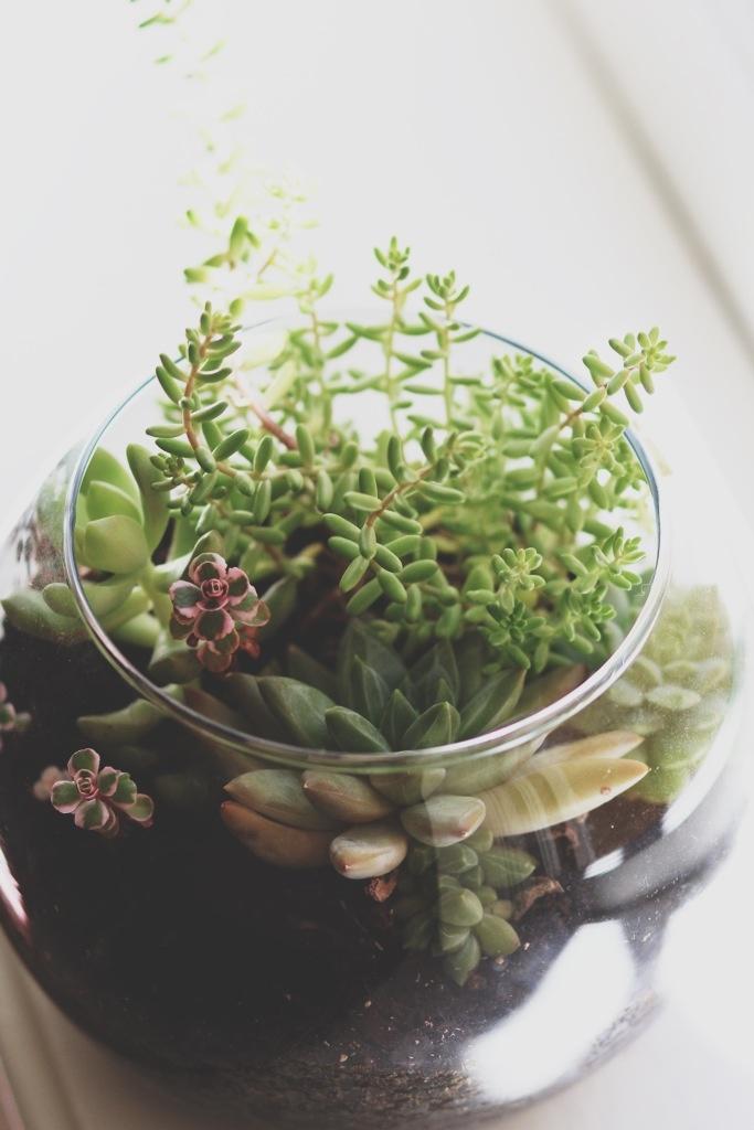 succulent terrarium garden ideas pinterest. Black Bedroom Furniture Sets. Home Design Ideas