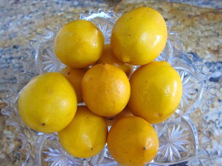 Meyer Lemon Marmalade with Ginger
