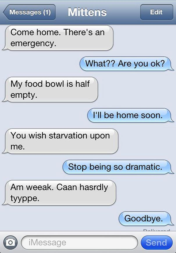 Ha ha ha  These are for my cat loving friends: What If Cats Could Text?