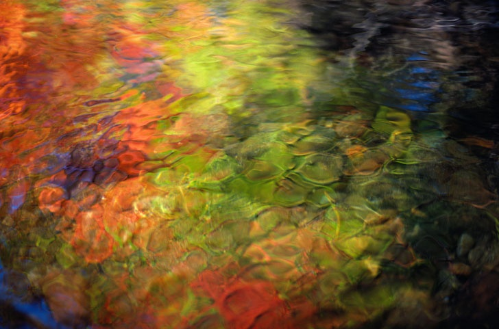 Autumn leaves reflected in a stream by don farrall on getty images