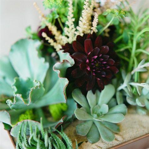 Succulent Centerpiece Wedding Ideas Pinterest