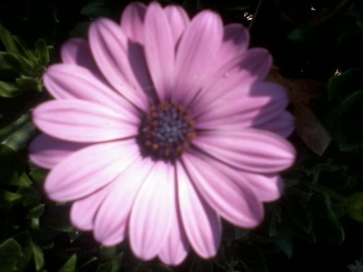 flowers by susan harris
