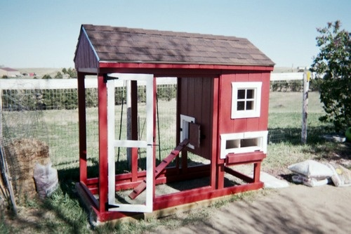 from building chicken coops for dummies projects pinterest
