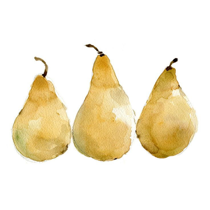 Pears reproduction print of original watercolor painting of 3 yellow pears still life yellow