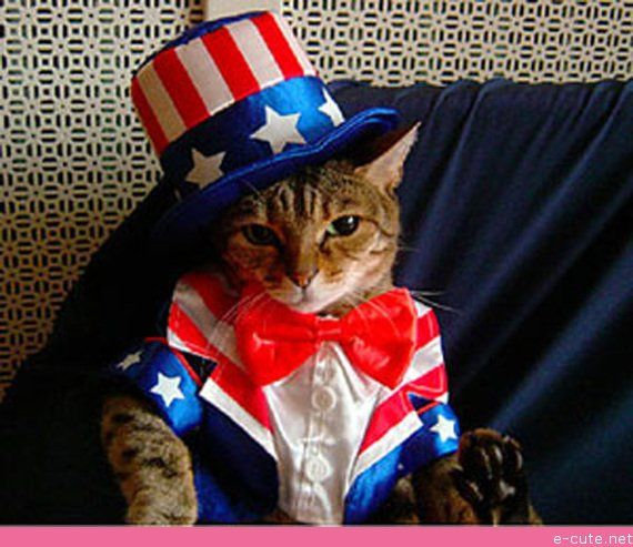 4th of july cat memes