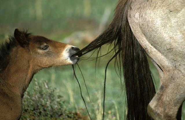 """horse / """"wait mom"""""""
