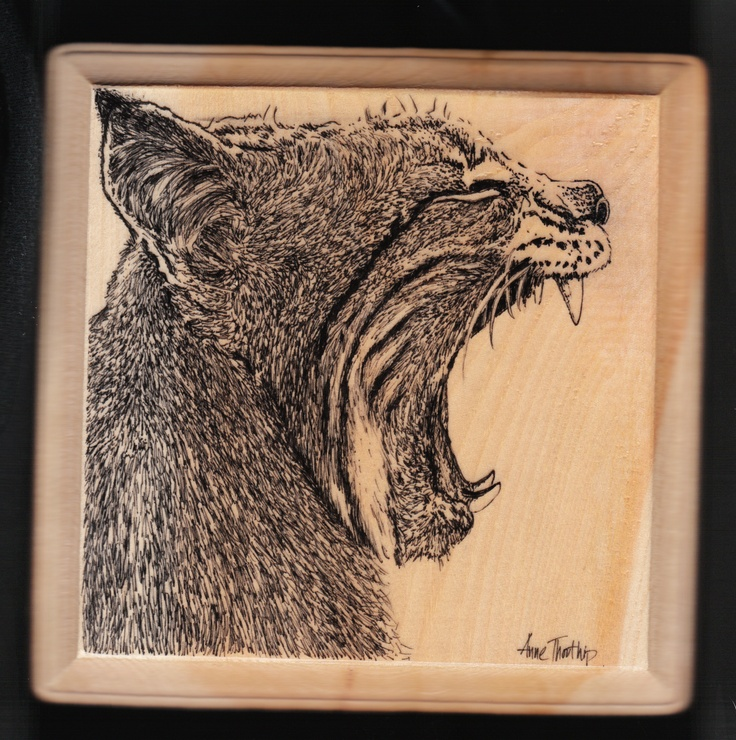 yawning lynx Ink drawing on wood | my other art stuff ...