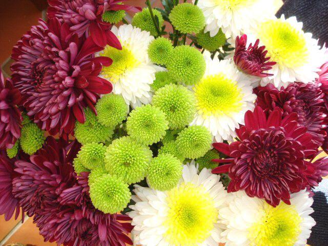 November Birth Flower Chrysanthemum