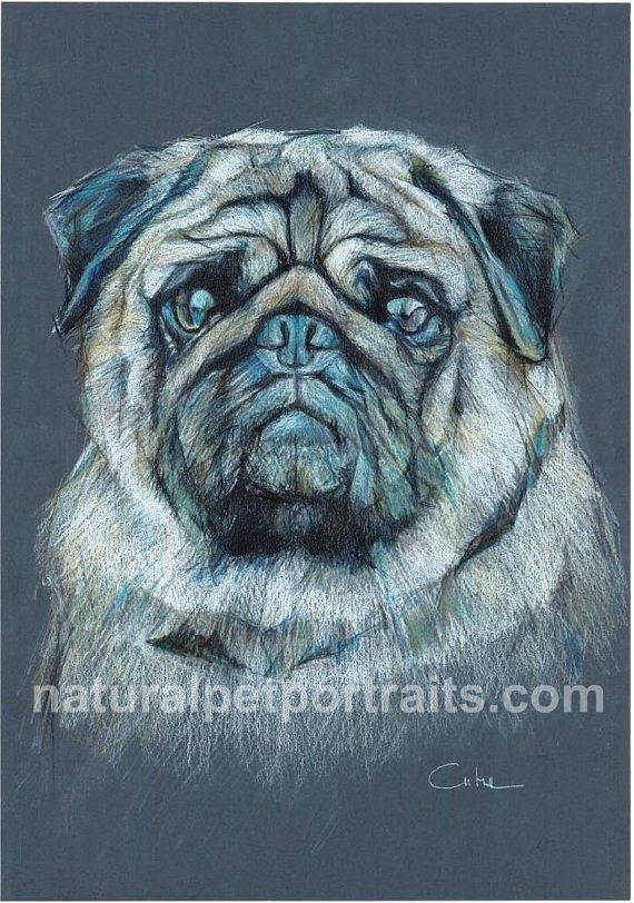 pugs coloring pages to print - photo#35