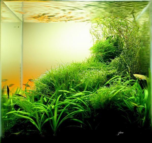Nano Live Planted Aquarium #aquarium | Aquariums | Pinterest