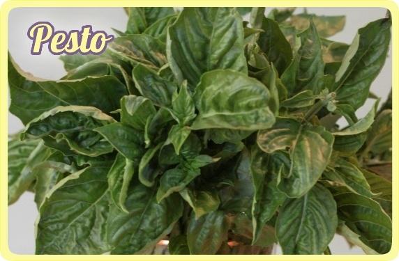 Classic Basil Pesto | Recipe
