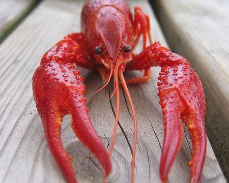 Mac Lobsta Recipe | Lighthouses & Lobster Shacks | Pinterest