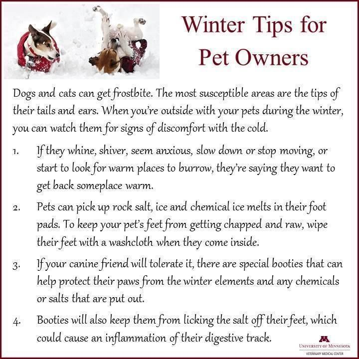 Winter Tips - helpful advice for pet owners!