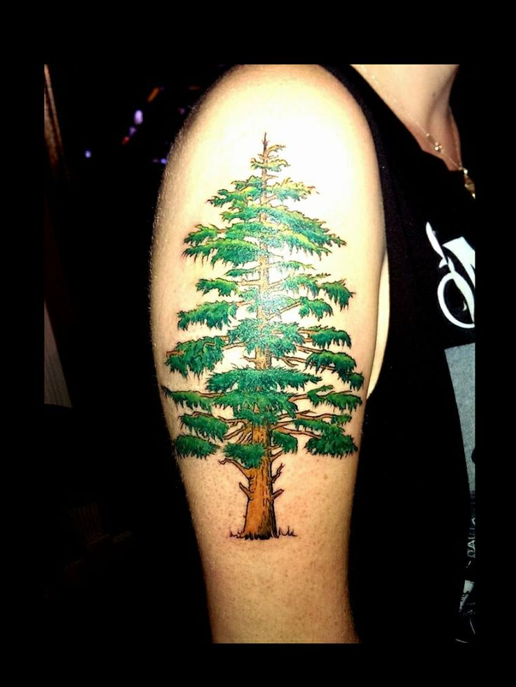 Evergreen tree tattoo by audrey mello my art pinterest for Evergreen tree tattoo
