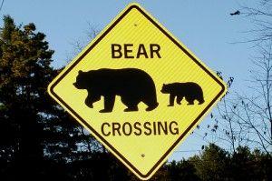 Zie jij beren op de weg? Misschien steken ze alleen maar over...  Beren op de weg (foto: (CC) Arthur Chapman)