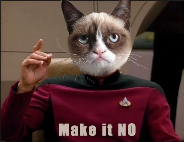uh no grumpy cat pinterest