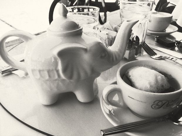 Elephant tea pot!