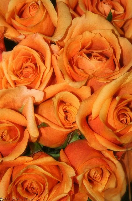 Orange roses? Beautiful! Hint, hint hubby! :)