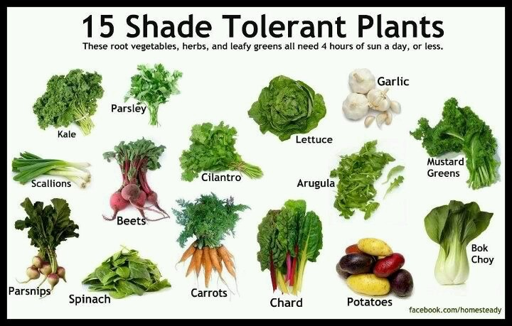 Shade Tolerant Plants Growing My Own Food Pinterest