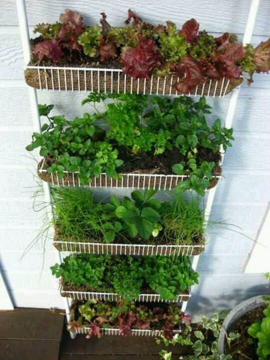 Vertical Gardening Gardening Pinterest