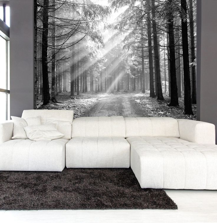 Wall mural black and white of coniferous forest in the for Black and white forest wall mural