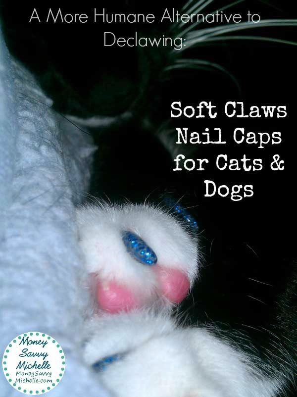 declawing cats humane - photo #11