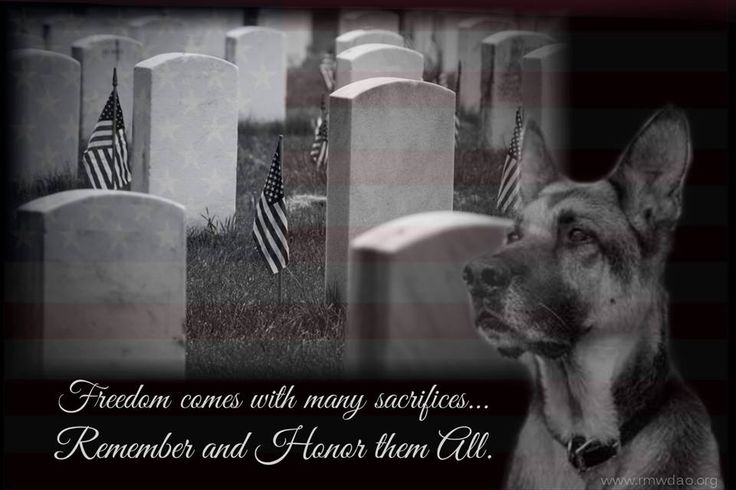 memorial day service dogs