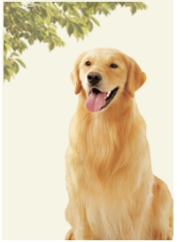 Nature s variety offers quality dog food for your furry loved ones