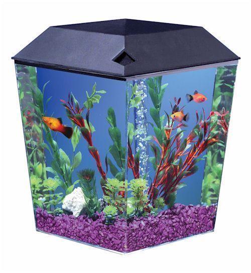 1 gallon aquaview diamond shaped fish tank for One gallon fish tank
