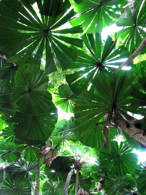 Džungla 87db85eaa6aa85c340c811054f670878
