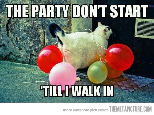 Party cat is in the house… Haha I already pinned this,  but it still makes me laugh way too hard
