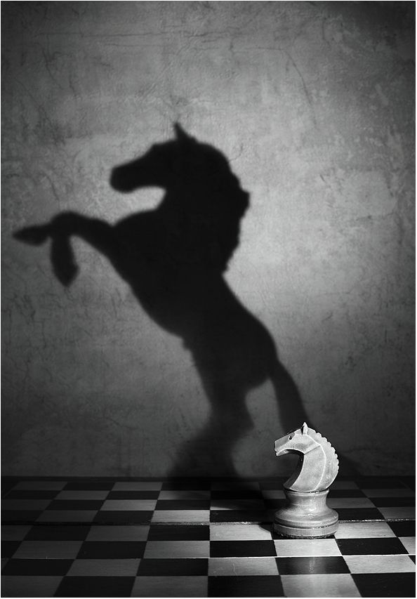 Photography black and white wonderful style by Victoria Ivanova still life Soul of the mustang