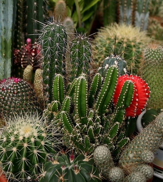 Cactus Garden Created With Love Cactus Pinterest