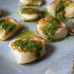 Seared Scallops with Chimichurri Dressing - a quick and impressive ...