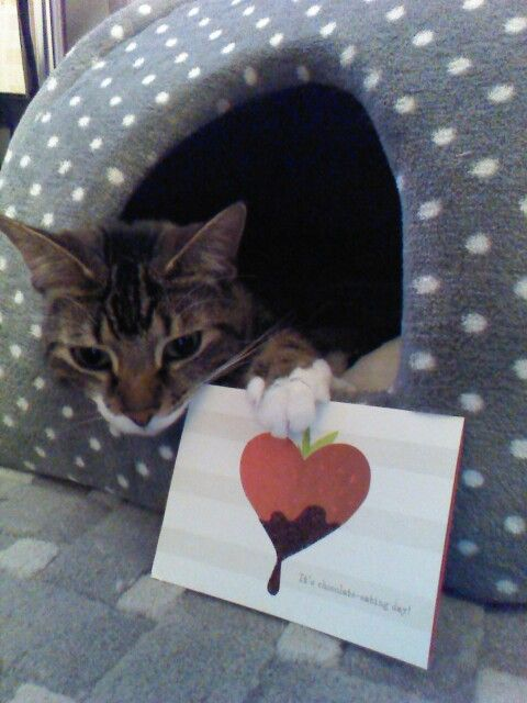valentines card imgur