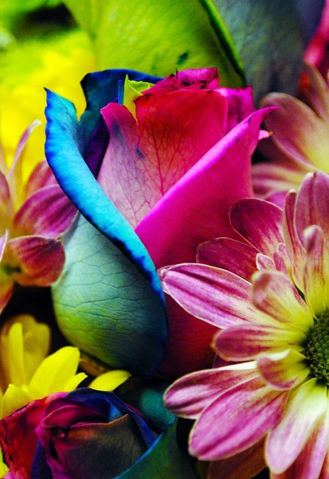 Colorful Wonderful Things Pinterest