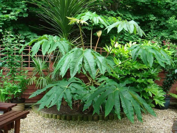 Attractive Uk Tropical Plants Part - 8: Brave Tropical Garden Design Ideas Uk 14 At Inspiration Article