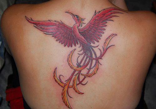 Glorious Phoenix