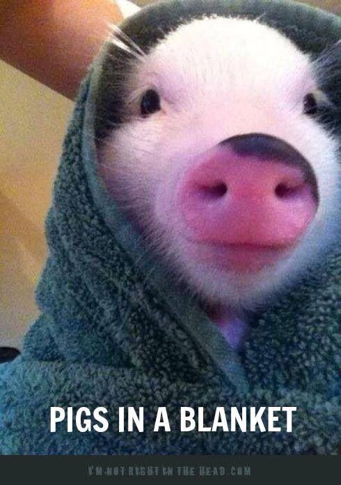 Pig in a blanket | Animals | Pinterest