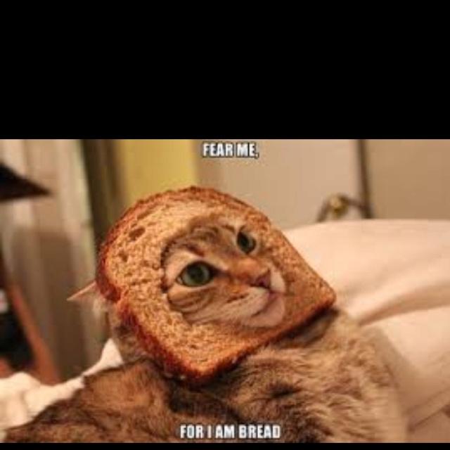 Inbred Cat Funny