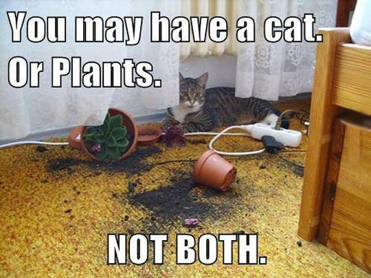 cat meme, cat and plants, funny cat