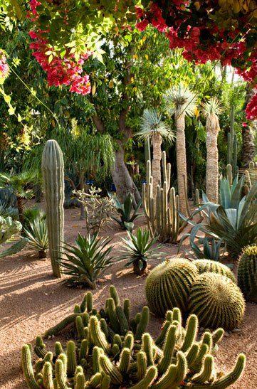 Majorelle garden g a r d e n s pinterest for Le jardin marrakech