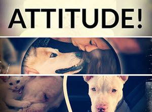 Attitude change with better Dog Connection