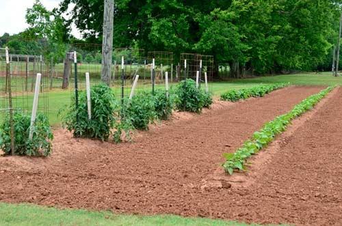 Bayou Gardener Review Ebooks