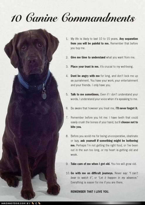 I love this, but it makes me cry every time.  Dogs are such a precious part of our lives.