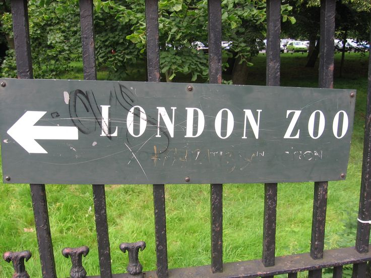 london zoo London zoo news find breaking news, commentary, and archival information about london zoo from the latimes.