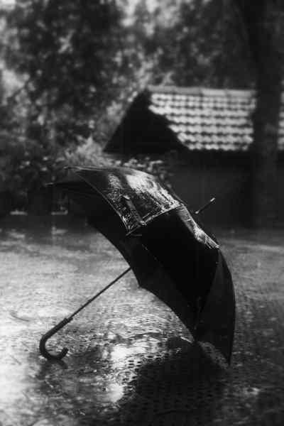 #rain #photography   Bumbershoot, Parasol, Umbrella ...