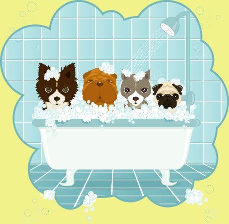 Scrub a dub dub pets grooming pinterest