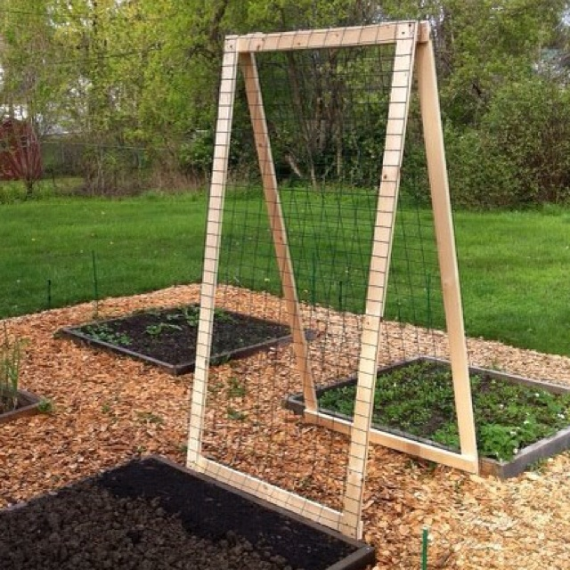 httpwwwvegetablegardenercomitem8315diy a frame veggie trellis